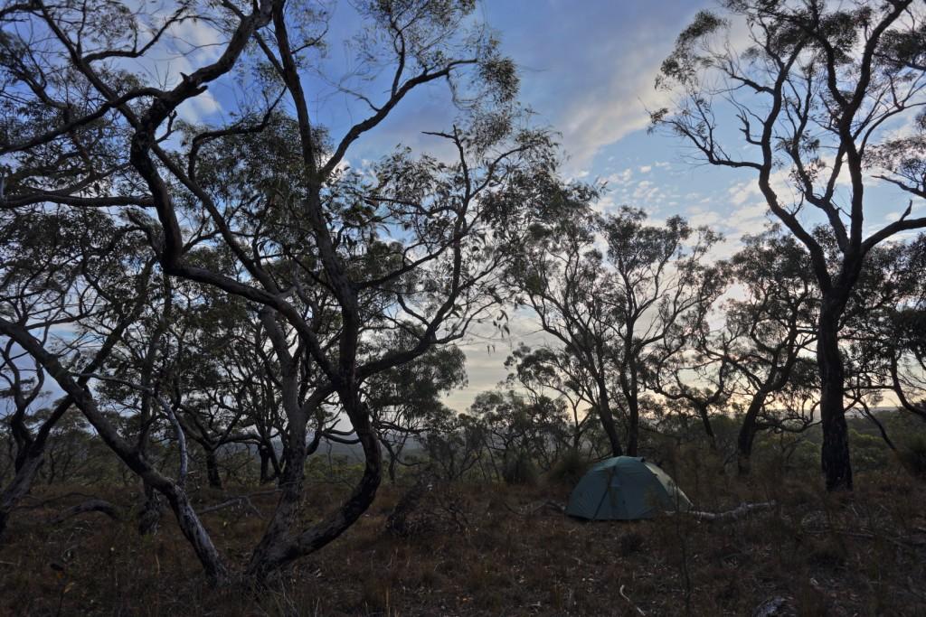 Zelten im Busch