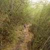 Durch den Bambuswald