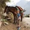 Pferd anfassen
